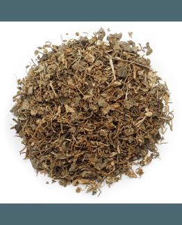 Centella asiatica seca
