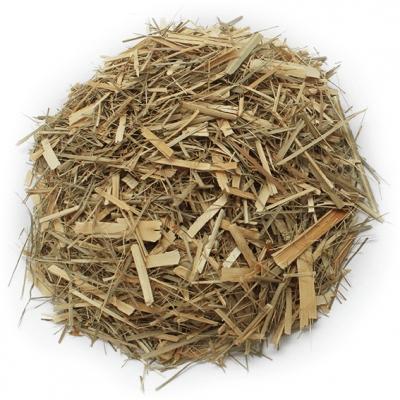 Lemongrass planta seca