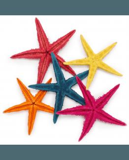 Estrela de Mar Filipina Coloridas