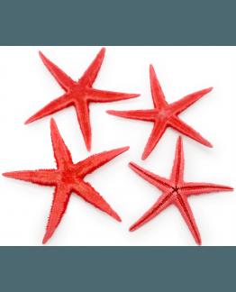 Estrellas de mar filipinas rojas 7-10 cm