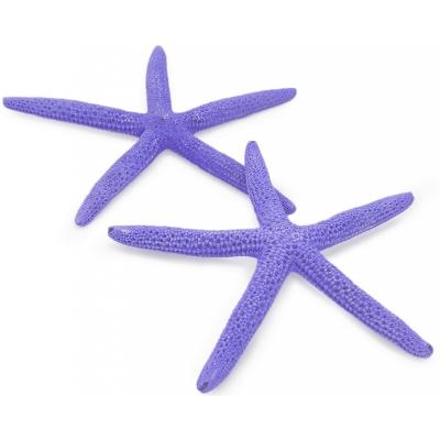 Estrella de mar natural albina violeta 12,5-15 cm
