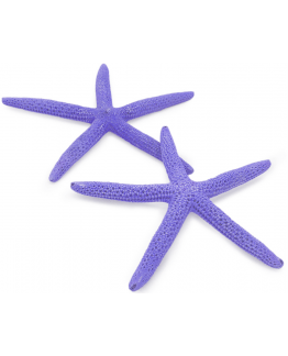Estrela do mar natural albino roxo 12,5-15 cm