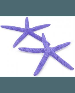 Estrela de Marinha Natural Albina Roxa