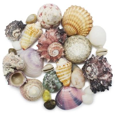 Caracolas y conchas de mar surtidas