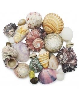 Caracóis e conchas naturais variadas
