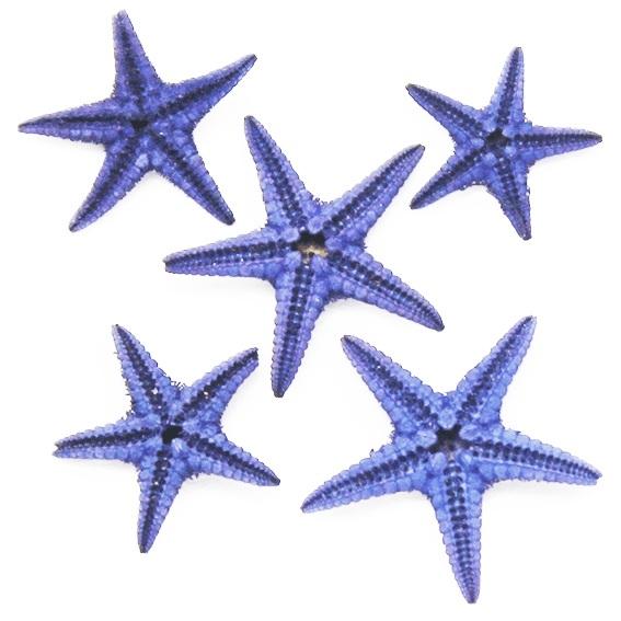 Estrela do mar filipina violeta mini
