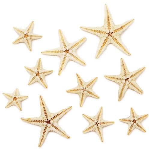 Estrelas Mini Marinhas Naturais Filipinas