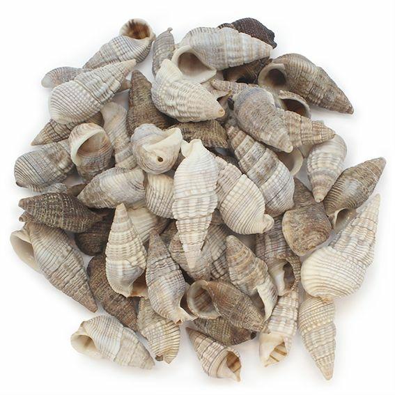 Caracois do mar a granel Cerithium Bulla